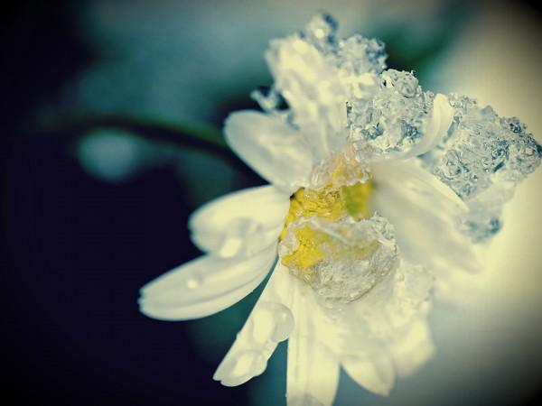 Kışın Evinizi Renklendirecek 10 Çiçek…
