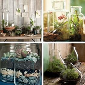 Evinizde Bitkiler Nasıl Seçilmeli?