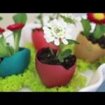 Yumurta Çiçek