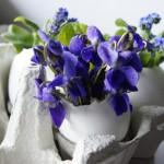 Yumurta Kabuğunda Çiçek