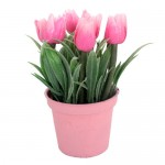 Saksıda Lale Çiçeği