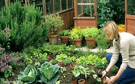 Ev içerisinde saksı sebzesi nasıl yetiştirilir?
