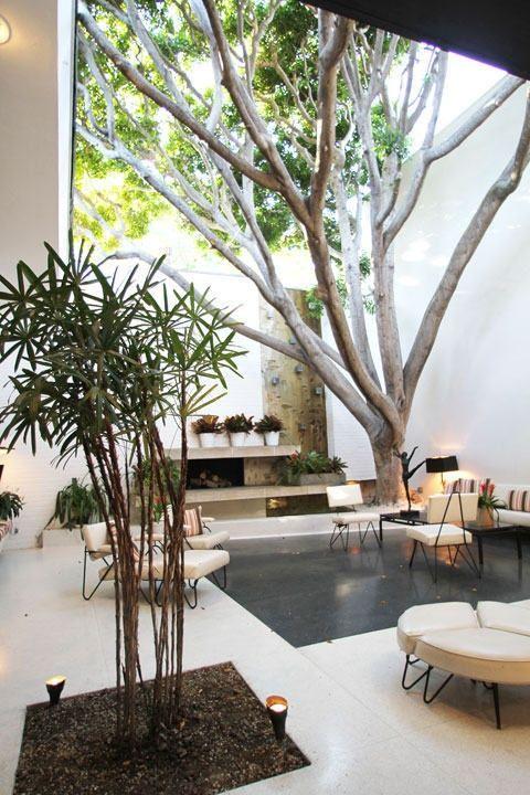 Ev Dekorasyonunda Ağaçlar