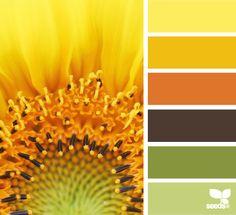 Ayçiçeği Renk Kombini