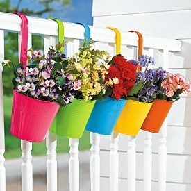 Balkon Çiçekleri