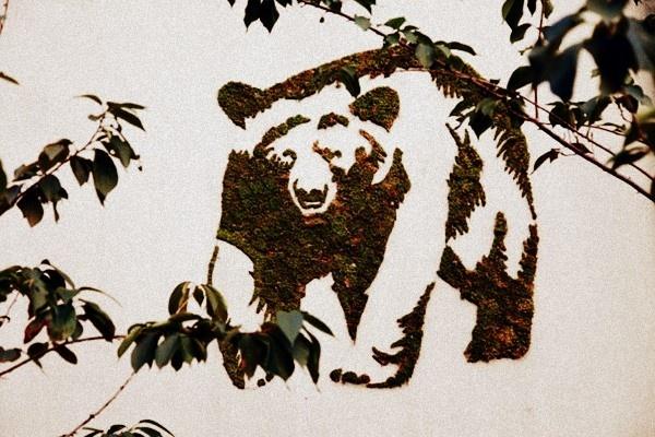 Bitkisel Grafiti Bahçe