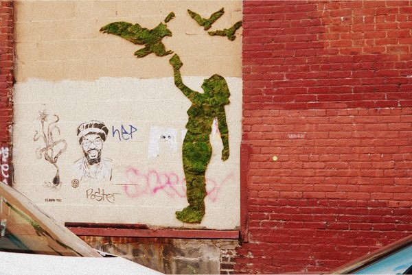 Bitkisel Grafiti Yapımı