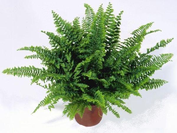 ask-merdiveni-salon-bitkileri