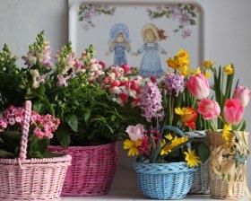 Çiçek Bakımı Ve Çiçeklerle Dekorasyon