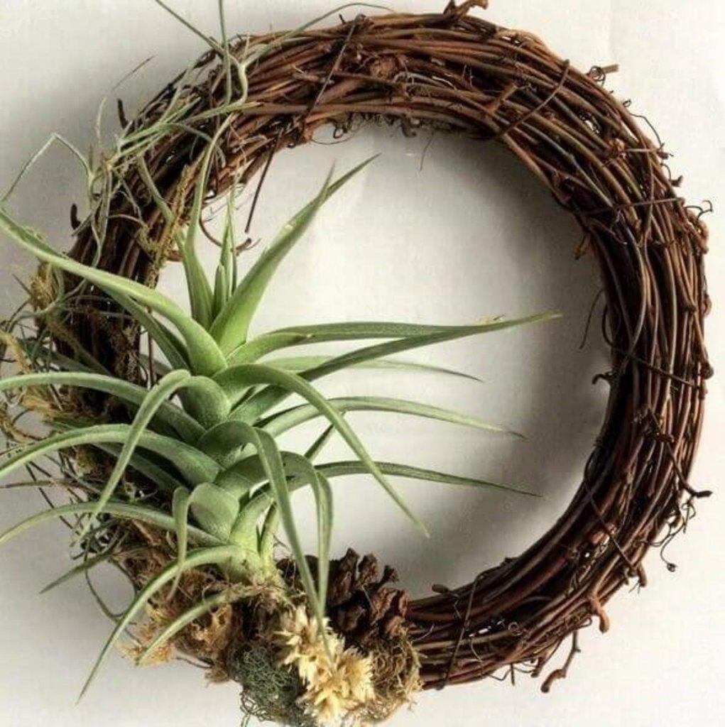ev-icin-bitkiler