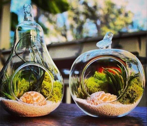 Hava Bitkisi ile Evinizde Yeni Bir Hayat